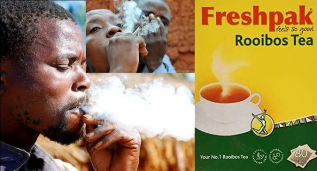 South-Africans-now-smoking-Rooibos-due-to-cigarette-ban